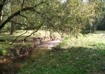 Park Leśny Witkowice