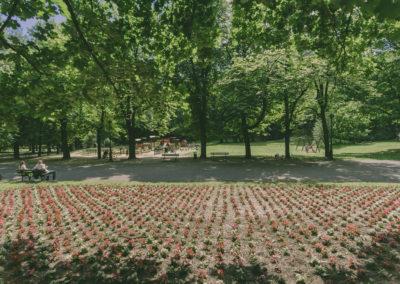 Park im. Wojciecha Bednarskiego